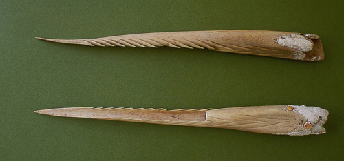 Spearpoints